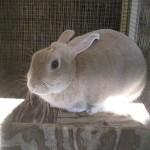 Bindy, the bunny