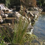 Pond and Waterfall in Carmel Valley Village