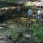 Garland Park-Carmel River