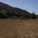 Garland Ranch Meadow