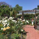 Jardines de San Juan's garden