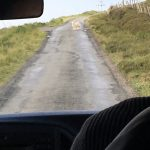Traffic Jam ... sheep on road