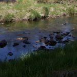 Creek Near Guinness Lake