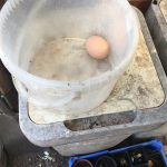 Fresh egg in a bucket
