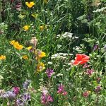 Patchwork of Colour at Trentham Gardens