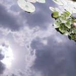Reflections and Pond Lilies