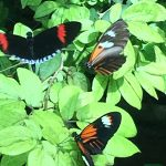 Butterflies at the St. Louis Zoo!